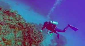 Diving Saxon Reef