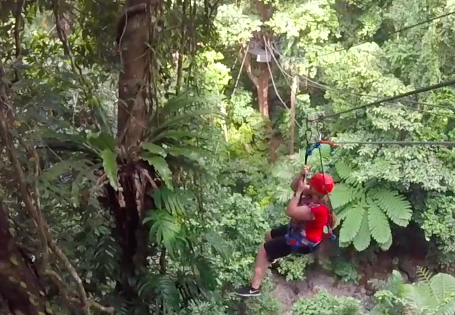 Zipline in the Daintree Forest