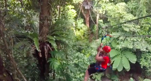 Zipline in the Daintree Forest